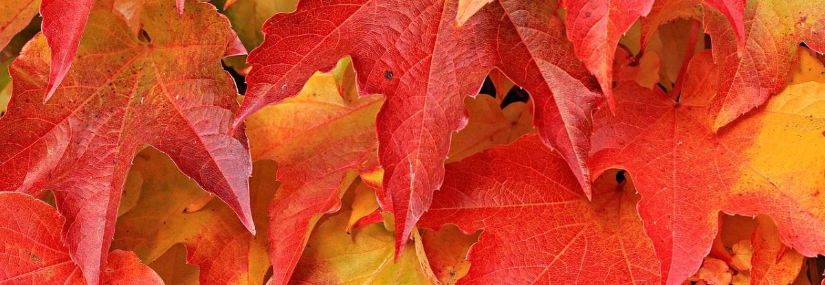 hébergements automne stages montessori vaison la romaine